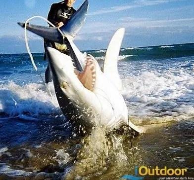 Miami beach shark fishing charters florida sport fishing for Miami beach fishing charters