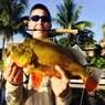 Palm Beach Peacock Bass Fishing