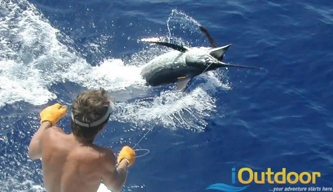 Deep sea fishing 10 outdoor adventures for fishing for Deep sea fishing west palm beach