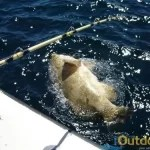 Grouper fishing