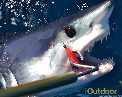 Shark fishing in florida ioutdoor fishing adventures shark fishing in florida altavistaventures Images