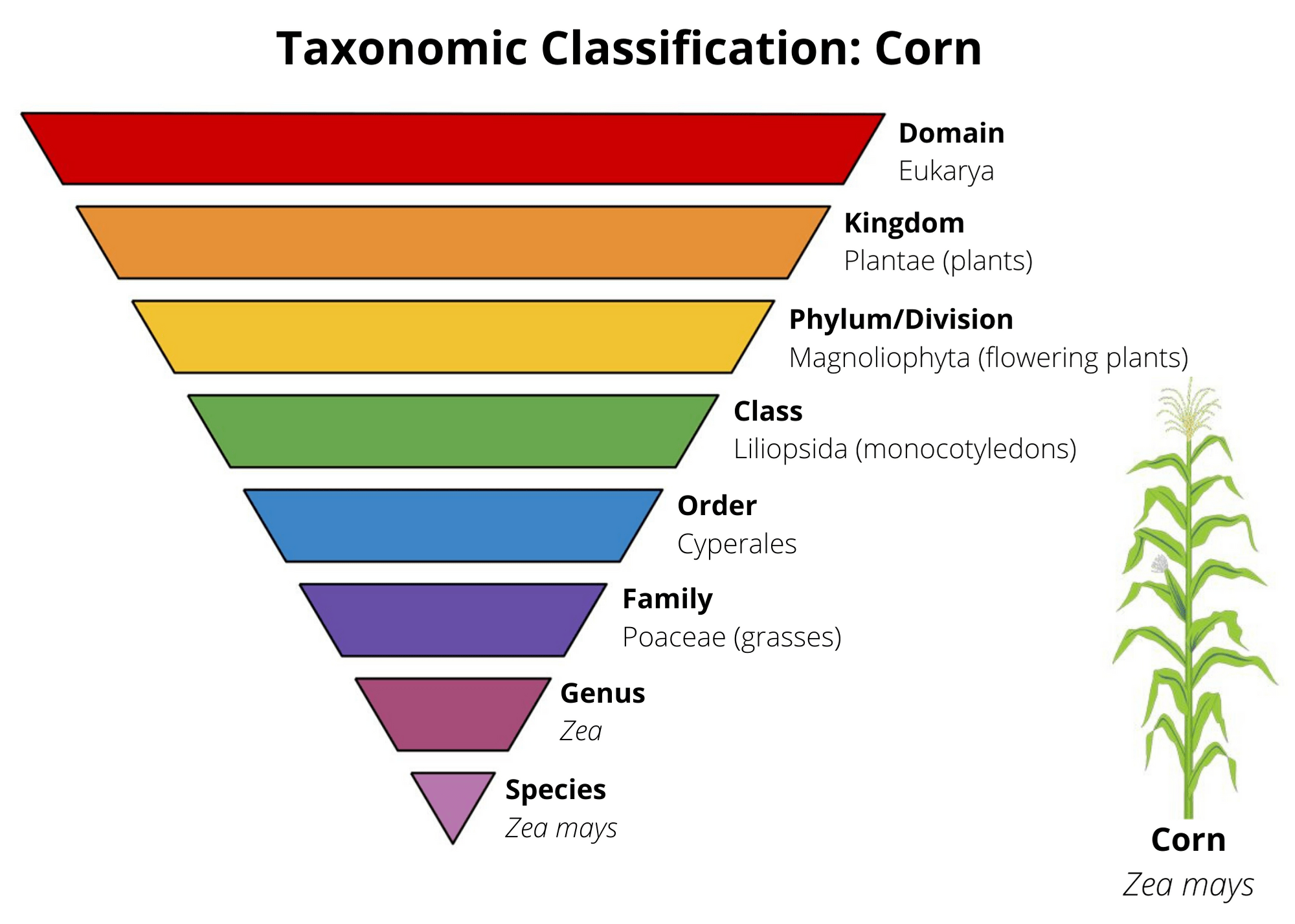 Science 101 Plant Classification