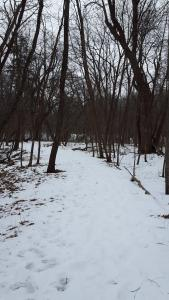 Snowshoe Hike at Iowa Arboretum