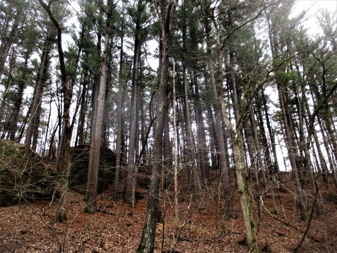White Pine Hollow Iowa | Iowa Herbalist