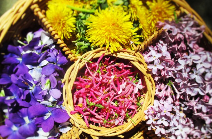 Flowers of the Herbalist | Deer Nation Herbs