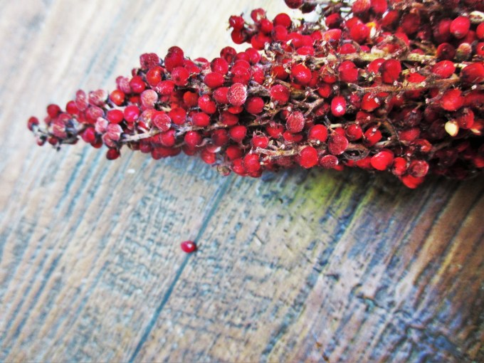 Sumac Berry Closeup | Deer Nation Herbs
