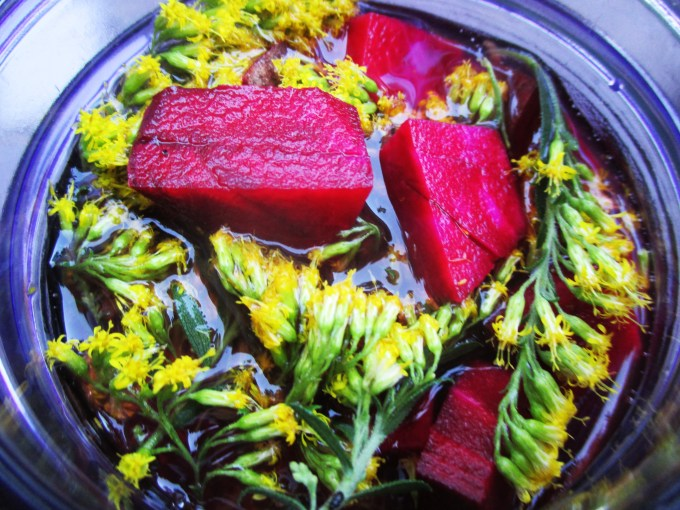 Making Beet, Peach, and Goldenrod Shrub (Allergy Tonic) | Deer Nation Herbs