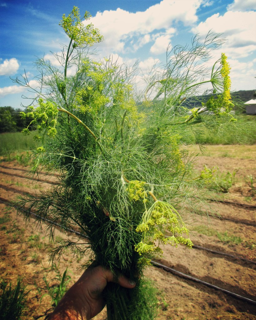 Dill Bouquet | Jupiter Ridge Farm