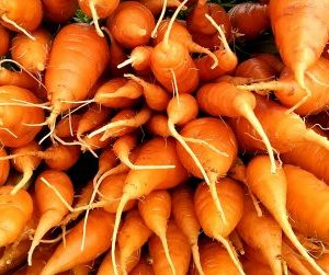 Carrots | Jupiter Ridge Farm