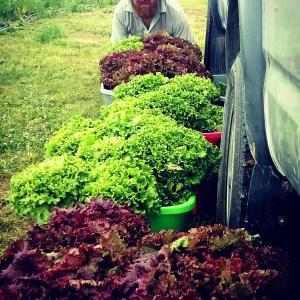 Veggie Delivery | Iowa Herbalist
