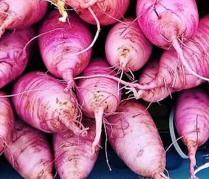 Purple Daikon Pile | Iowa Herbalist