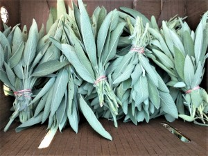 Sage Bunches   Iowa Herbalist