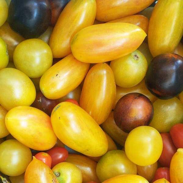 Cherry Tomatoes | Iowa Herbalist
