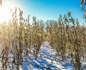 Cerro Gordo County Iowa Farmland Values