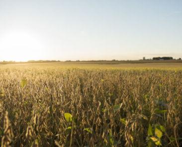 Land Values Hancock County Iowa