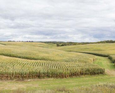 Northeast Iowa Land Values