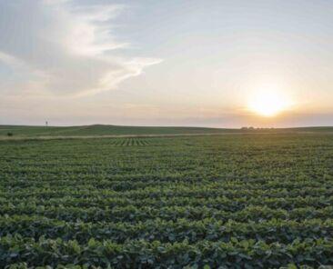 Central Iowa Land Values