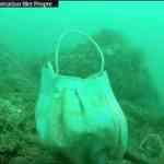 [電脳コラム]新型コロナで使った使い捨てマスクがイルカの命を奪う!