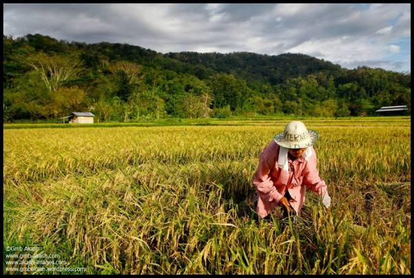 Farming in Laos