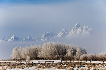 Frosted_Trees_Tetons