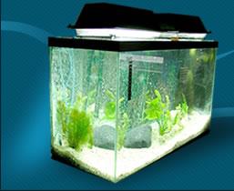 My Lights on Aquarium Click to Enlarge