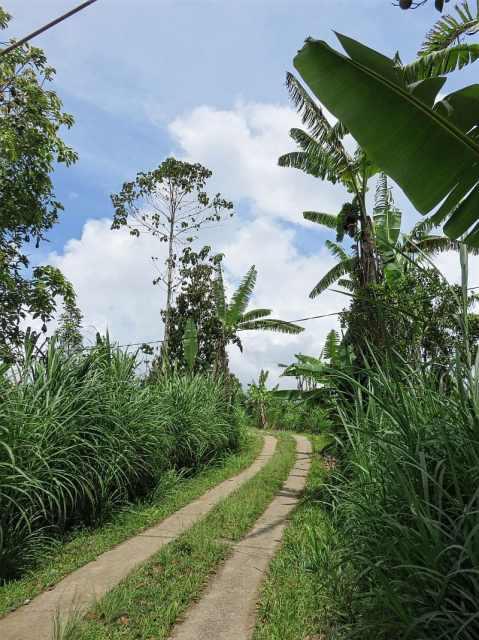 Northern Bali, Indonesia