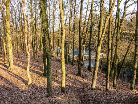 Galgenwiel - Dunes of Loon and Drunen