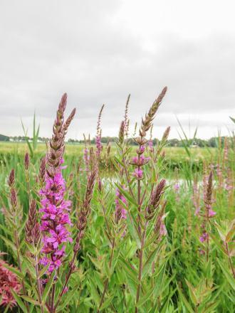 Flower fields Gardens of Appeltern