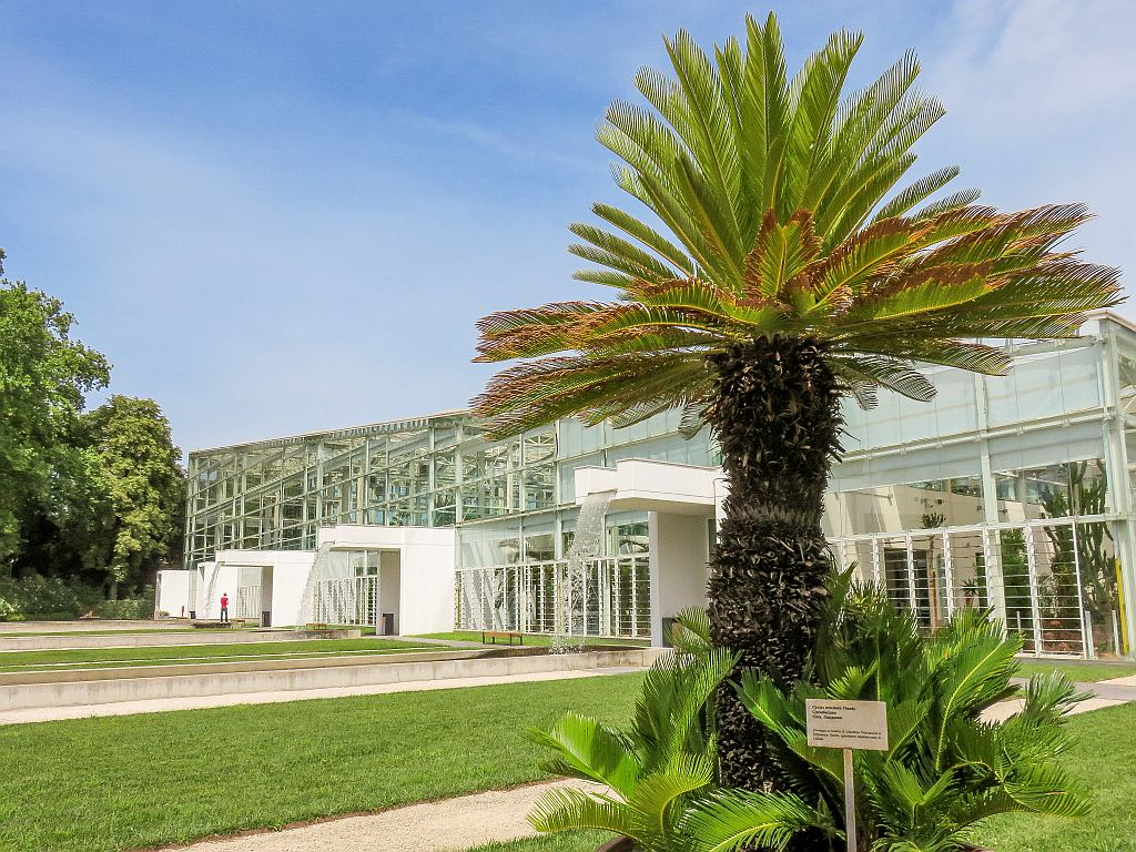 a tall palm tree in front of a building with glass walls, the Botanical Garden in Padua