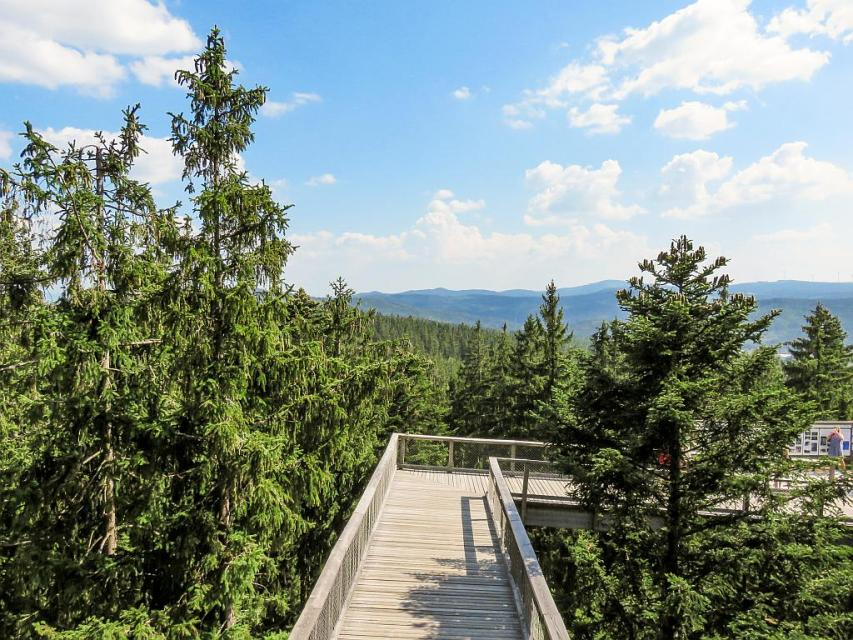 Walking the Treetop Walkway in Lipno