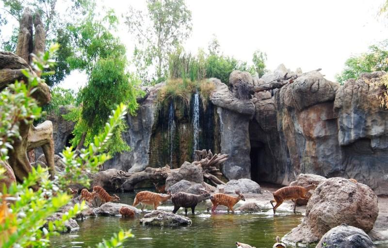 Il Bioparc Valencia , uno dei parchi faunistici piu all'avanguardia del mondo