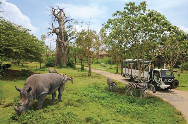 Parchi Safari