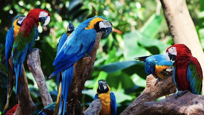 Loro Parque diventa il primo zoo europeo ad ottenere il certificato di trattamento umano dei suoi animali