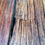 Does Exotic Deck Wood Ever Rot?
