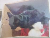 la mia gatta con i gattini di Susanna Albini