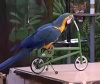 Funny parrot show