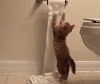 TP Cat