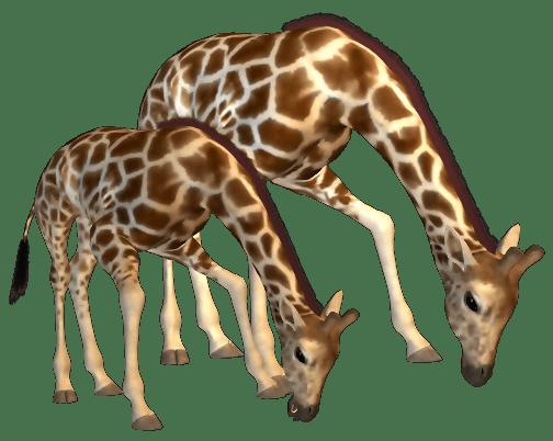 Imagem de Girafas