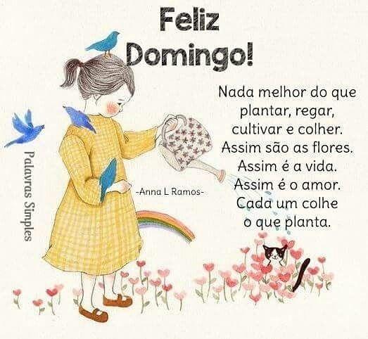 Feliz Domingo cultivar flores