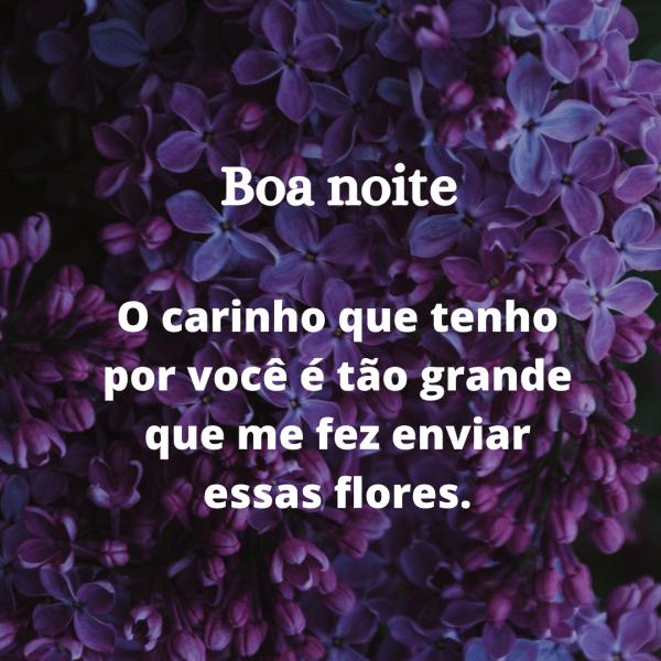 carinho e flores amor