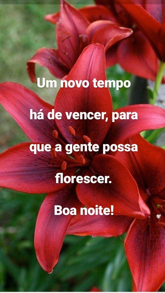 Mensagem maravilhosa de boa noite com flores