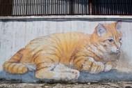 101 Stray cats