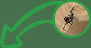 IPM Pros Banner spider