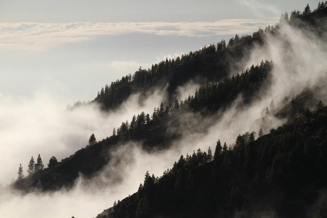 Nebbia Foresta - Foto di Monica Volpin da Pixabay