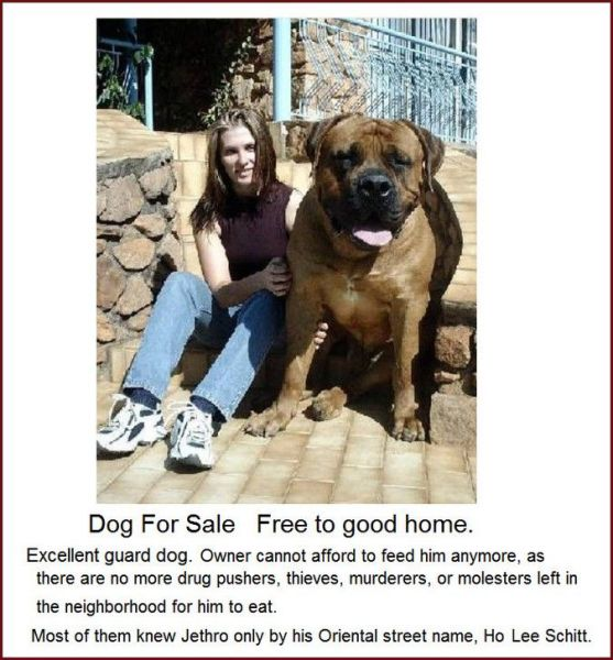 Dog for sale - Jethro - Giant dog