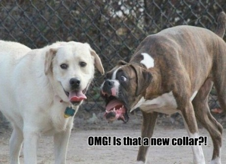 OMG! is that a new collar?? dogs caption