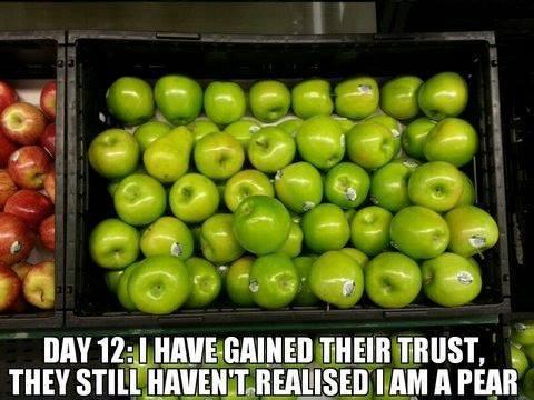 Trust meme