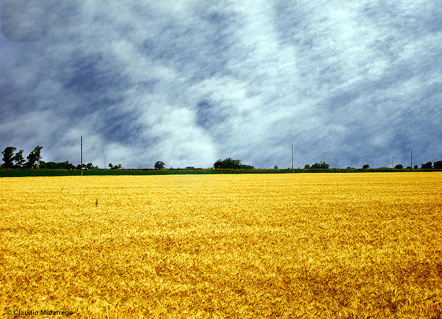 Countries that produce most of their grain intake locally, as Argentina does with wheat, are more resilient against global economic and environmental fluctuations. Photo by Claudio Ar.