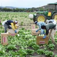 Farm workers in Salinas California