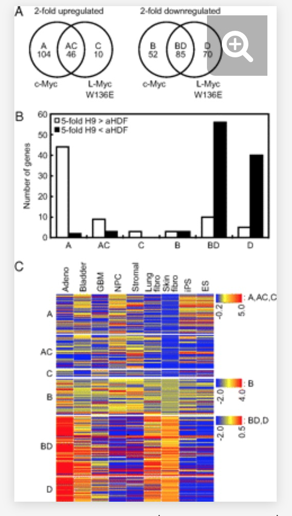 Fig.-5-Nakagawa-et-al.-Myc-in-cancer-and-IPScs